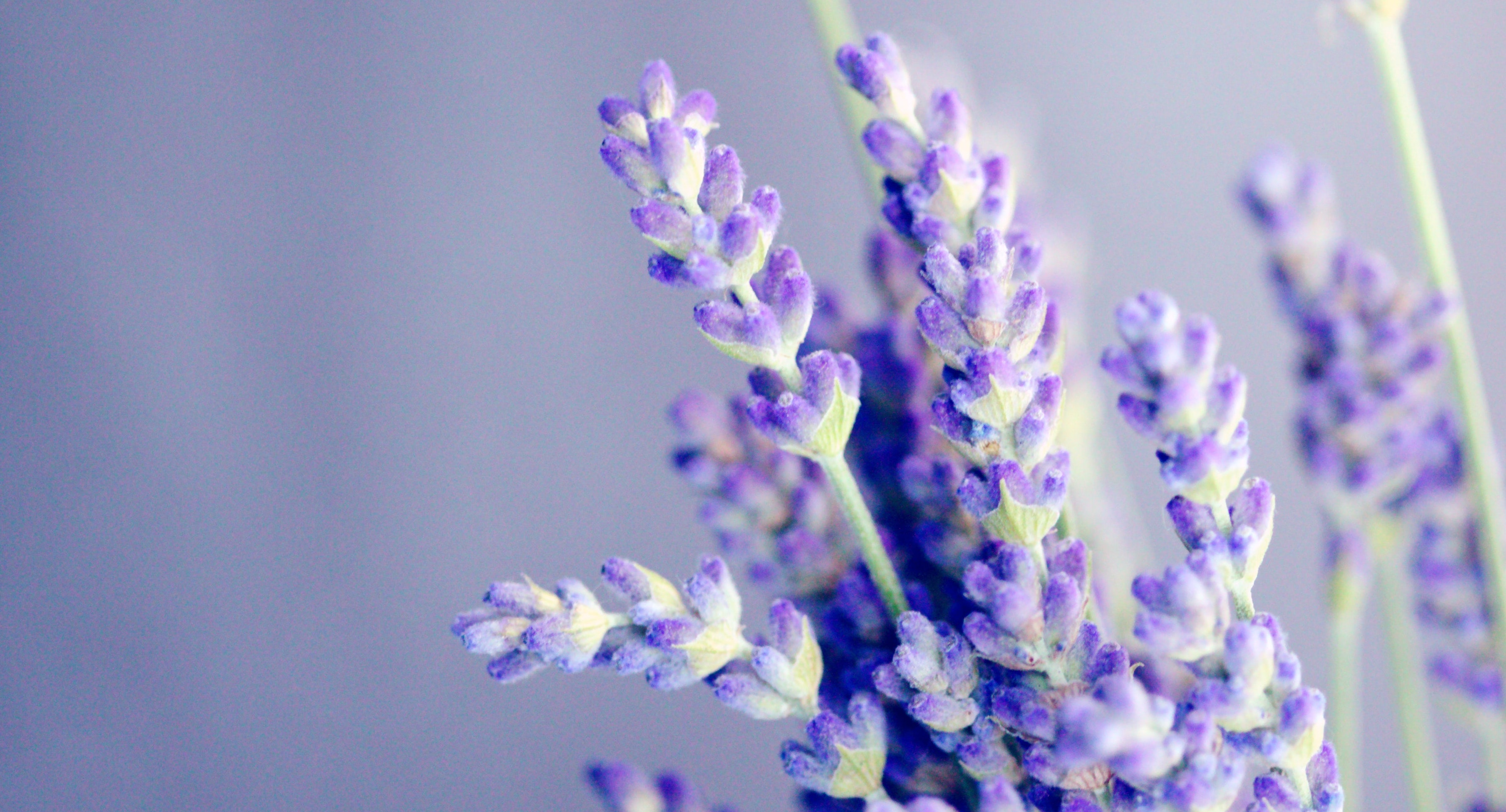 Make-it-Yourself Aromatherapy